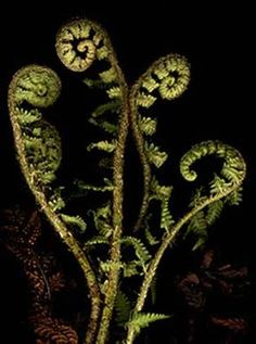 Did you know that ferns have sex in beds of mosses?
