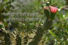 Shayari In Hindi, Hindi Quotes, Golden Leaves, Good Morning Quotes