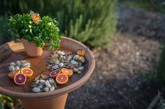 Butterflies help pollinate your garden. Create this simple Butterfly Bath to draw butterflies by providing them with a source of clean water.