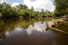 Edisto River....North America's longest free flowing blackwater river