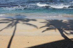 Outside our house at Sunset Beach, Oahu, Hawaii, palm tree shadows on the sand