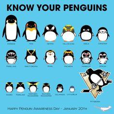 Types of penguins Pens Hockey, Hockey Puck, Hockey Teams, Ice Hockey, Hockey Stuff, Hockey Players, Hockey Party, Hockey Sticks, Blackhawks Hockey