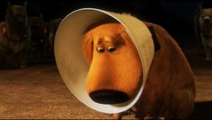 6 Alternatives to the Classic 'Cone of Shame'