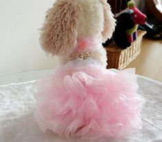 I have a feeling you'll like this one 😍 Luxury ruffle tutu wedding dress  http://dogtrunk.com/products/high-quality-luxury-pink-purple-dog-cat-puppy-ruffle-tutu-dress-pet-princess-wedding-dress-summer-clothes-s-m-l-xl-free-shipping?utm_campaign=crowdfire&utm_content=crowdfire&utm_medium=social&utm_source=pinterest