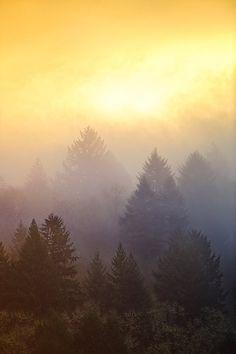 Sunrise over the woods