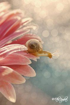 Photograph a Snail by Etha Ngabito on 500px