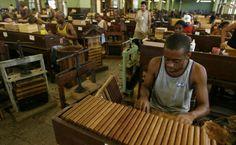 Tobacco workers roll cigars at the Partagas Cigar Factory in Havana Cuba Cigar, Cuba Today, Havana Cigars, Viva Cuba, Premium Cigars, Cuba Travel, Havana Cuba, Beautiful Islands, Tourism