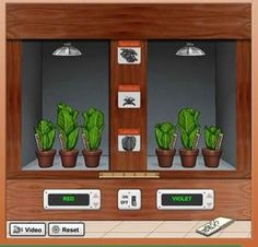 Photosynthesis Virtual Lab Photosynthesis Lab Question: Which Colors Of The Light Spectrum Are Most Important For Plant Growth? Biology Lessons, Science Biology, Teaching Biology, Science Lessons, Science Education, Science Fair Projects, Life Science, Ap Biology, Environmental Education