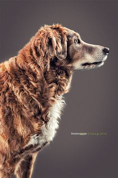 portrait of an old dog by linsensuppe -  fotografie on 500px
