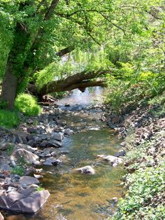 Stream in Scottsville, VA, 8 x 10 fine art photo, signed Water Images, Summer Scenes, Fine Art Photo, Photo Reference, Water Garden, Nature Pictures, Water Features, Beautiful Landscapes, Landscape Paintings