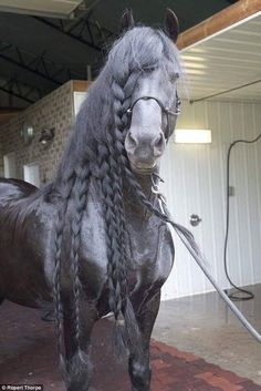 OK. This beautiful horse HAS to have extensions. How can any horse have that thick of mane?