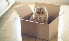 Schrödinger's microbe: physicists plan to put living organism in two places at once http://www.rightrelevance.com/search/articles/hero?article=4108e03b91ae2a72849b68bc1d9a3095820d4abe&query=particle%20physics&taccount=parrticlephy…