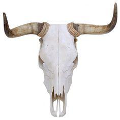 Spanish Fighting Bull Skull
