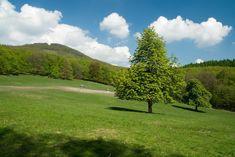 Túra: Na Geldek Častovskou dolinou   HIKING.SK Golf Courses, Hiking, Walks, Trekking, Hill Walking