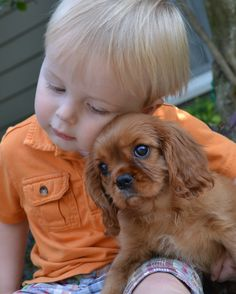 Cavalier King Charles Spaniel {Maybe this will be Lex in a year or so with a new baby Cavie to love on?}