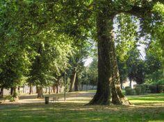 Parc Chantemerle à Corbeil-Essonnes - Grand et bel arbre
