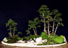 Image from http://www.artofbonsai.org/art-of-bonsai-awards/2008/aob_004_erethia_microcarpa.jpg.