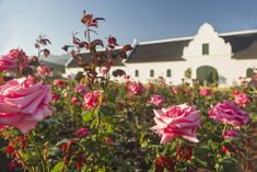 Tasting Room, Wine Tasting, How To Memorize Things, Things To Come, Types Of Roses, Hybrid Tea Roses, Sauvignon Blanc, Spring Time, Vines