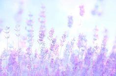 紫色のロマンス