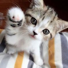 Hi there! _____________________________ We LOVE cats and kittens...a lot! We have a website that is updated multiple times a day with the very best cat stuff on the internet. For the cat obsessed we have Cat Videos, Cat Pictures, Cat Stories
