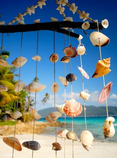Sea shell chime overlooking a tropical lagoon. | premium image by rawpixel.com  Follow the link to get free 1 month premium image.  https://www.rawpixel.com/?referral=24502&u=Thanya