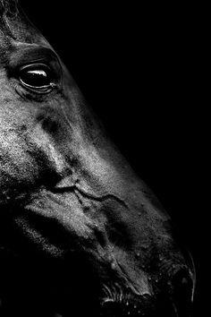 Photo de cheval noir sur noir #black
