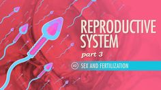 Reproductive System, part 3 - Sex & Fertilization: Crash Course A&P Human Body Systems, Reproductive System, Pregnancy Calendar, Best Nursing Schools, Science Videos, Nursing Tips, Anatomy And Physiology, Fertility
