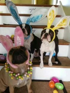 Easter Bullies!