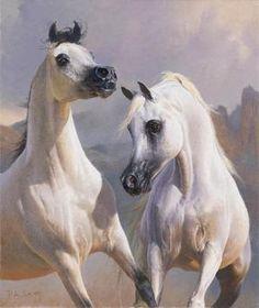 8 Best Arabian Horses images | Cavalli arabi, Cavalli, Animali