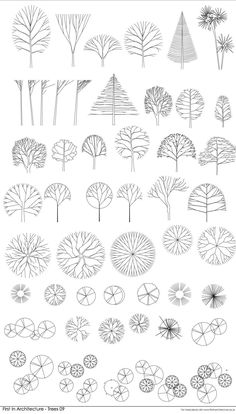 Bien-aimé simple drawing trees section architecture sanaa - Google Search  JR38