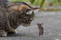 The country cat meets the country mouse....