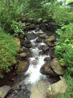 River from curug cibeureum