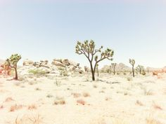 Nick Meek's dreamy and nostalgic photo of Joshua Tree National Park.  #photography #desert #film