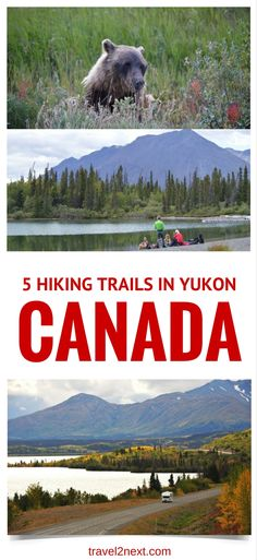 5 best Hiking Trails in Yukon, Canada. Canadians call it 'bear-a-noia'. Fear of walking with bears. I've never heard of it. Ottawa, Ontario, Vancouver, Toronto, Yukon Canada, Visit Canada, Canada Eh, Canadian Travel, Hiking Tips