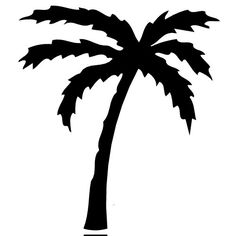 Fan Palm Tree mugs, t-shirts, picture mouse pads, & more