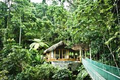 One of the most amazing places I have stayed, and would stay again in an instant, is the Pacuare Eco Lodge in Costa Rica... I stayed in the above cabana high in the rain forest canopy above the ground. The cabana has its own private bridge and hot tub.... You can walk out on the bridge and see monkeys and toucans and feel like you are atop the trees.