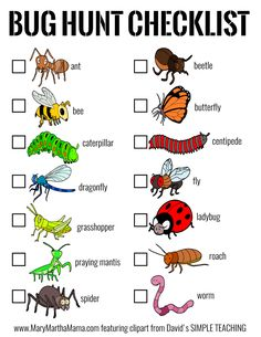 Forest School Activities, Insect Activities, Learning Activities, Preschool Activities, Bug Hunt, Insect Crafts, Mary And Martha, Preschool Science, Preschool Bug Theme