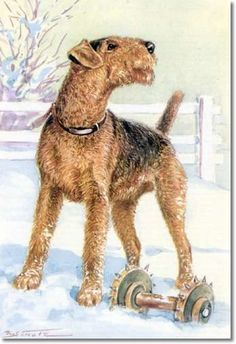 color-plate-from-unser-freund-der-hund-of-airedale-terrier.jpg (343×500)