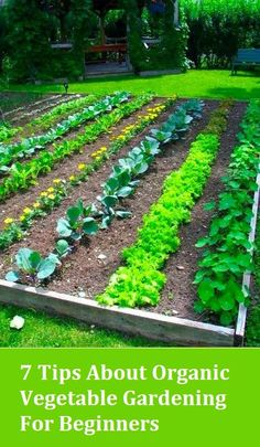 7 Tips About Organic Vegetable Gardening For Beginners