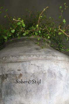 SOBER en STIJL: Zin in Groen......... Muehlenbeckia plant