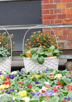 Columbia Rd Flower Market (London)