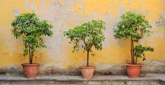 Garden Planters, Planter Pots, Herbs, Painting, Conservatory, Inspiration, Plants, Biblical Inspiration, Flower Planters