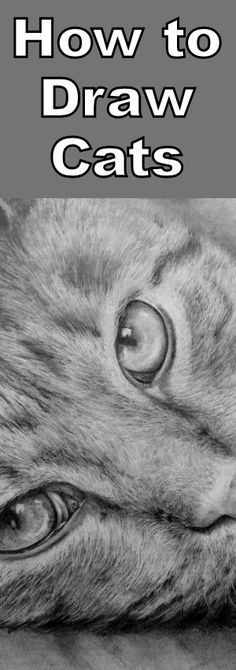 Learn how to draw realistic cats