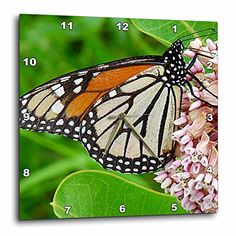 3dRose dpp_10930_2 Monarch Butterfly and Milkweed by AngelandspotWall Clock 13 by 13Inch >>> Check out this great product.