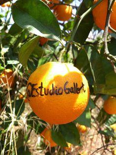 #minaranja Naranja Ecológica dedicada de nuestros campos a @EstudioGallent por Naranjas Che