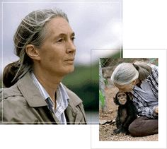 jane goodall pictures   Jane Goodall; The Woman Who Redefined Man ...