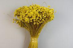 Flori uscate Plant