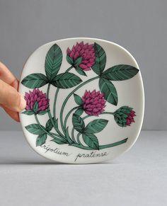 Red Clover Trifolium Pratense  Botanica Plate  by MisterTrue, $39.00