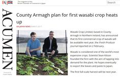 Wasabi News covers all activities related to the production of wasabi in Northern Ireland. Unusual Plants, Rare Plants, Japan News, Rare Flowers, Flower Seeds, Northern Ireland, The Fresh, How To Plan, Strange Flowers