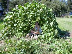 August 26, 2005 – Squash Tunnel - high hopes gardens